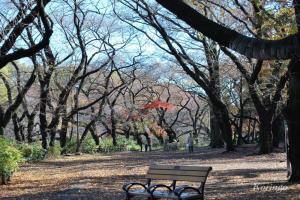 2008年11月25日井の頭公園