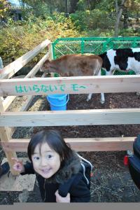 2008年11月26日子牛