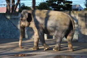 2008年11月26日ハナ子