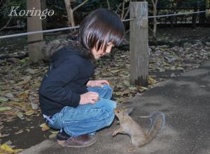 2008年11月26日リスと友達