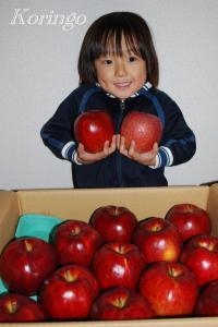 2008年11月27日りんご