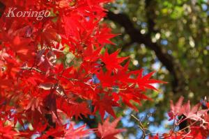 2008年11月30日井の頭公園