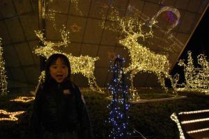 2008年12月6日トナカイ
