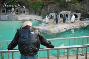 2008年12月6日ペンギン