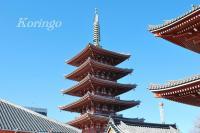 2009年1月11日門に入る前 五重塔