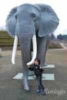 2009年1月21日大きなゾウ