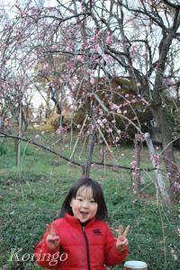2009年2月21日しだれ梅
