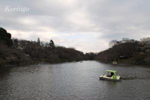 2009年3月23日井の頭公園