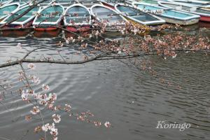 2009年3月23日ボートと桜