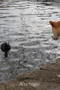 2009年3月23日鳥と柴犬