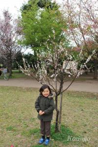 2009年3月23日小さな桜