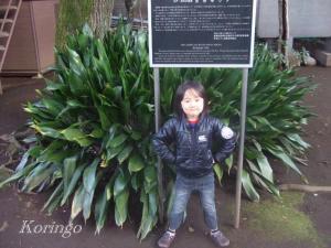 2009年3月26日吉祥寺ウド