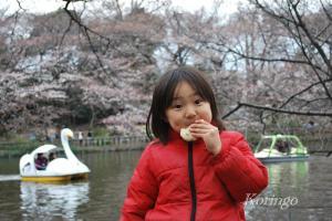 2009年3月27日お花見