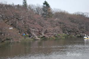 2009年3月27日七井橋より 吉祥寺駅側
