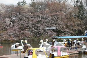 2009年3月27ボート後ろの桜
