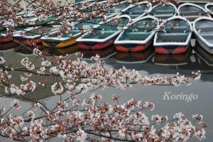 2009年3月27日ボートと桜