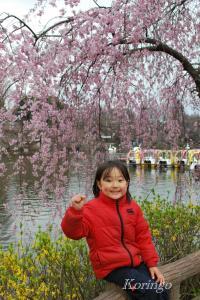 2009年3月27日しだれ桜