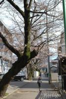 2009年3月29日住宅街