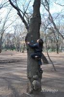 2009年3月29日木登り