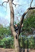2009年3月29日木登り2