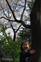 2009年3月29日木登り花見