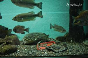 2009年3月29日環境水槽
