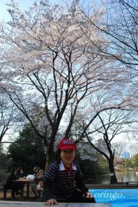 2009年4月3日お花見2