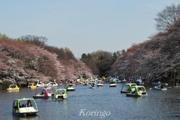 2009年4月3日井の頭公園