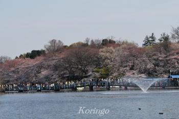 2009年4月3日七井橋