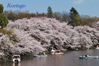 2009年4月6日七井橋より2