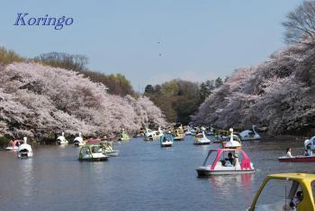 2009年4月6日七井橋より