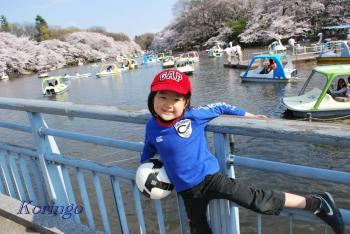 2009年4月6日七井橋より3