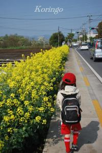 2009年4月19日菜の花