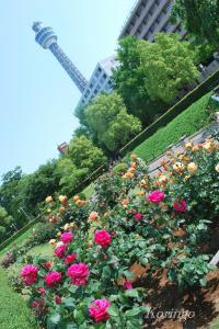 2009年5月9日マリンタワー