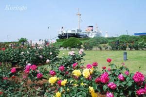2009年5月9日氷川丸と薔薇