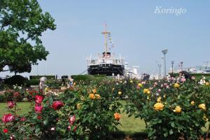 2009年5月9日氷川丸とバラ2