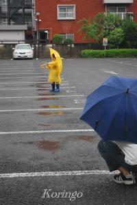 2009年5月31日撮影