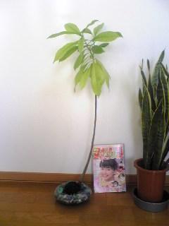 2009葉っぱ