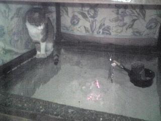 猫+こたつ