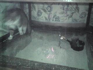 猫+こたつ2
