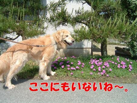 ブログ用20