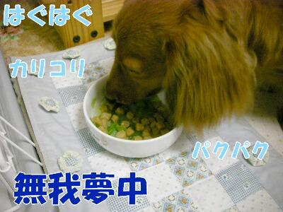 DSCN0245.jpg