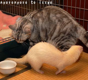 巨猫ちまきと文太