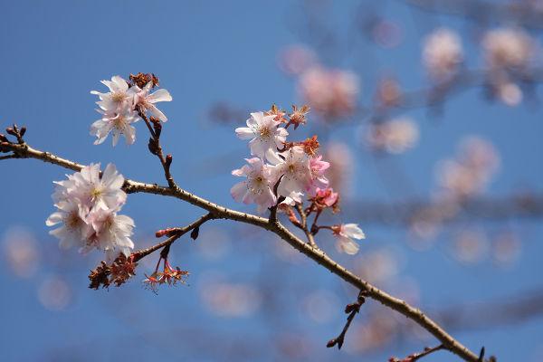 桜_05_1