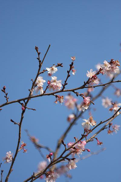 桜_05_2