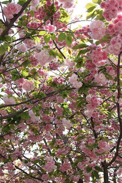 桜_07_02