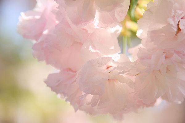 桜_07_03