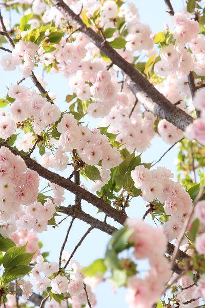 桜_07_10