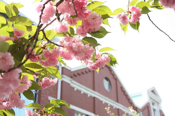 桜_09_02
