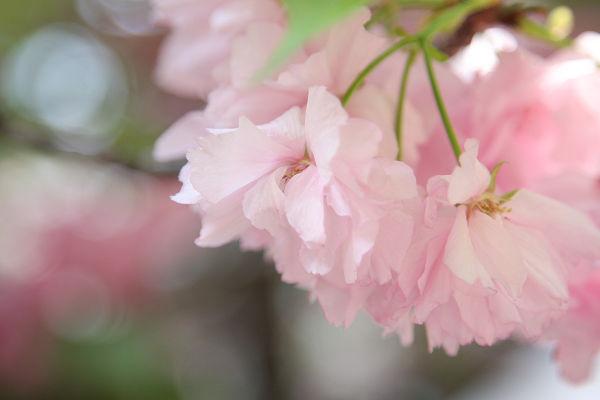 桜_09_03